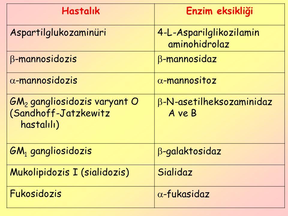 Hastalık Enzim eksikliği. Aspartilglukozaminüri. 4-L-Asparilglikozilamin aminohidrolaz. -mannosidozis.