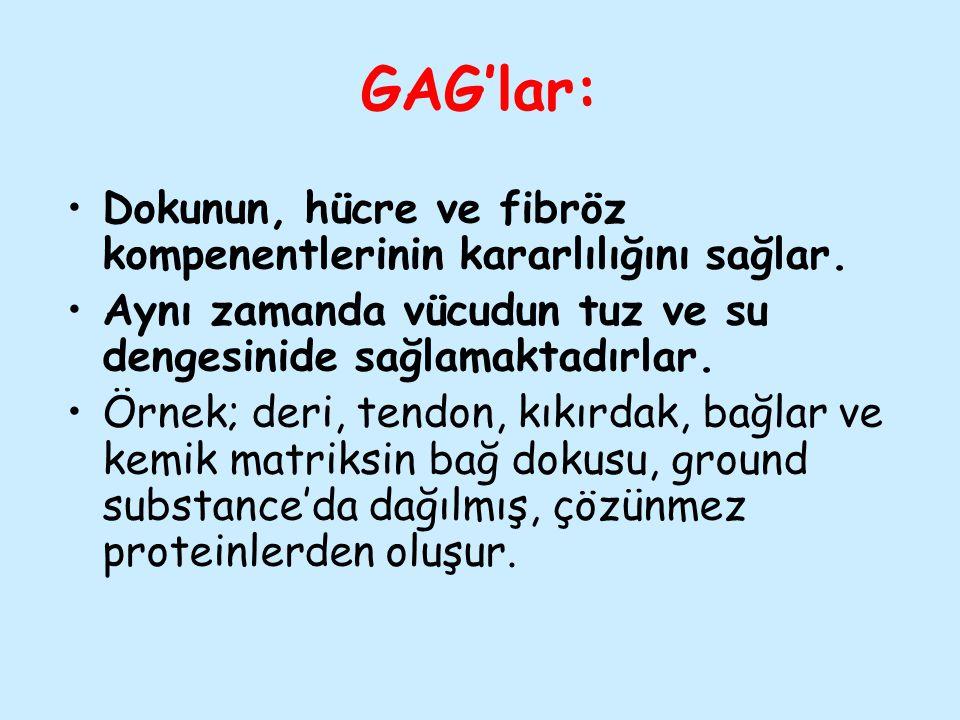 GAG'lar: Dokunun, hücre ve fibröz kompenentlerinin kararlılığını sağlar. Aynı zamanda vücudun tuz ve su dengesinide sağlamaktadırlar.