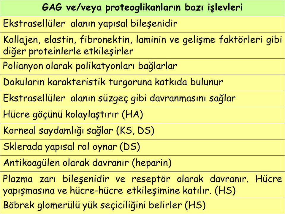 GAG ve/veya proteoglikanların bazı işlevleri