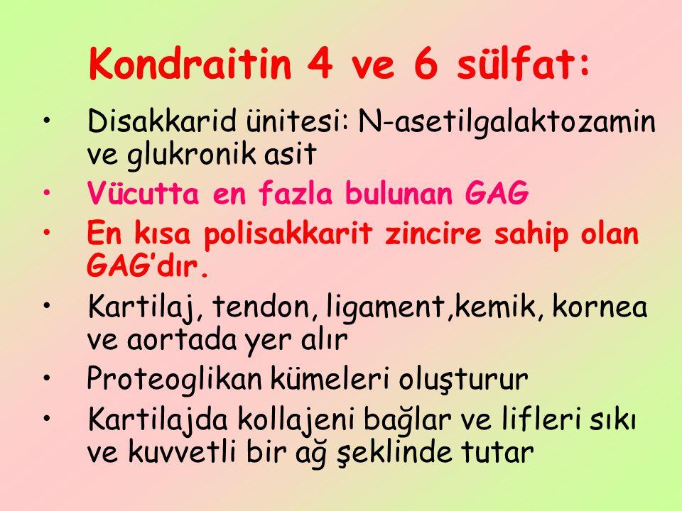 Kondraitin 4 ve 6 sülfat: Disakkarid ünitesi: N-asetilgalaktozamin ve glukronik asit. Vücutta en fazla bulunan GAG.