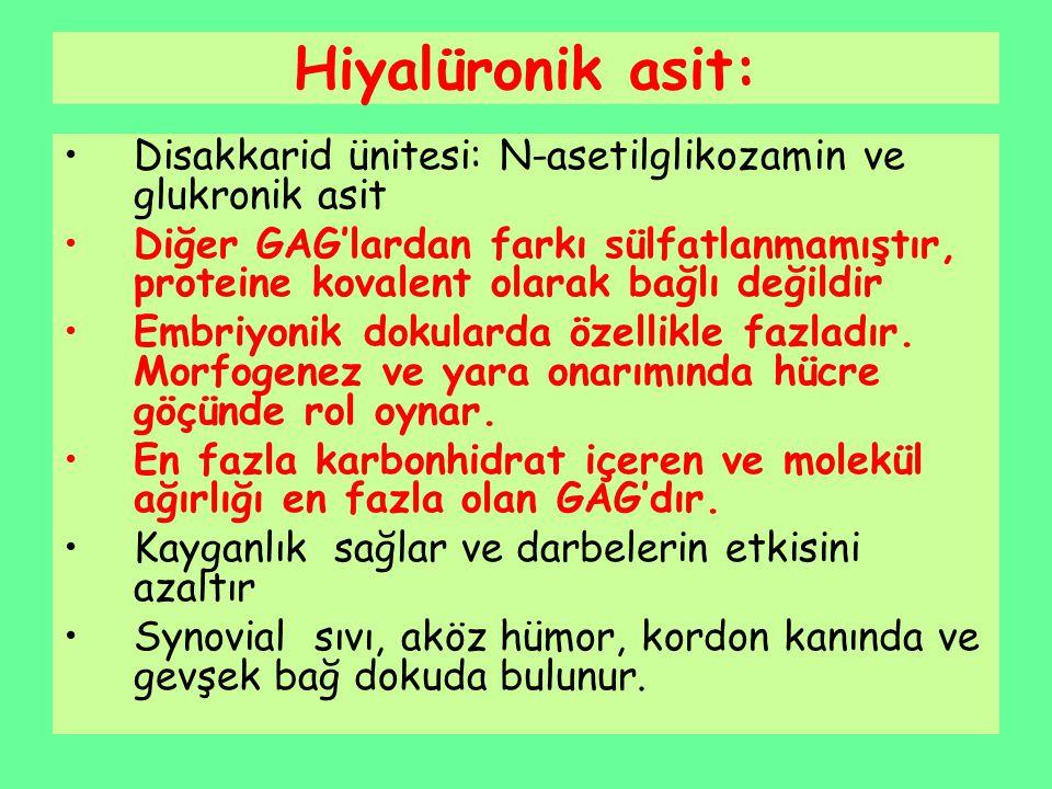 Hiyalüronik asit: Disakkarid ünitesi: N-asetilglikozamin ve glukronik asit.