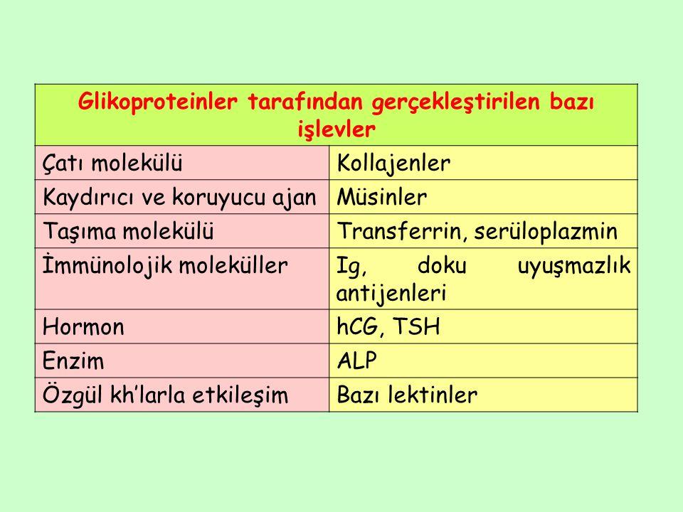 Glikoproteinler tarafından gerçekleştirilen bazı işlevler