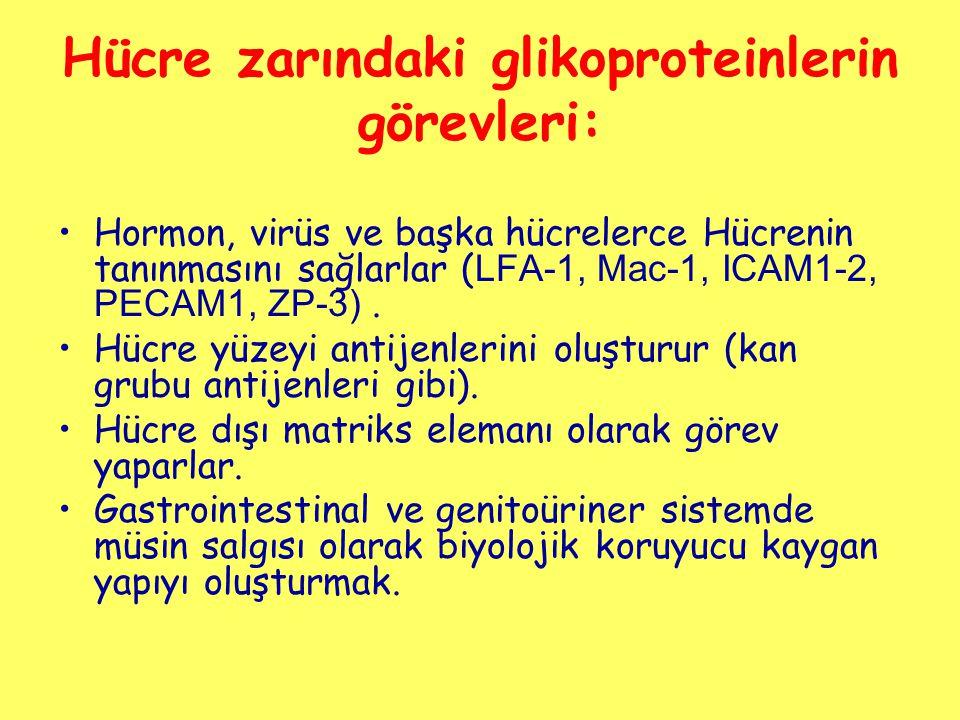Hücre zarındaki glikoproteinlerin görevleri: