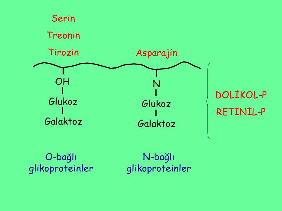 O-bağlı glikoproteinler N-bağlı glikoproteinler