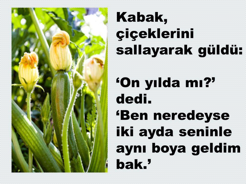 Kabak, çiçeklerini sallayarak güldü: