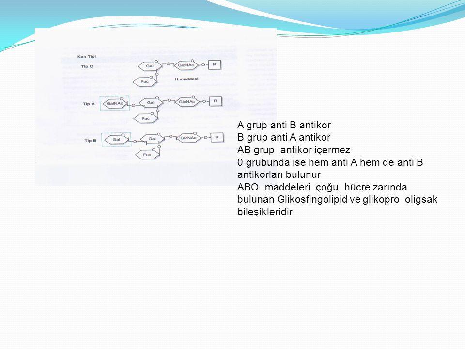 A grup anti B antikor B grup anti A antikor. AB grup antikor içermez. 0 grubunda ise hem anti A hem de anti B antikorları bulunur.