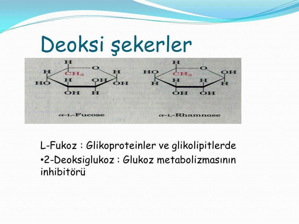 Deoksi şekerler L-Fukoz : Glikoproteinler ve glikolipitlerde