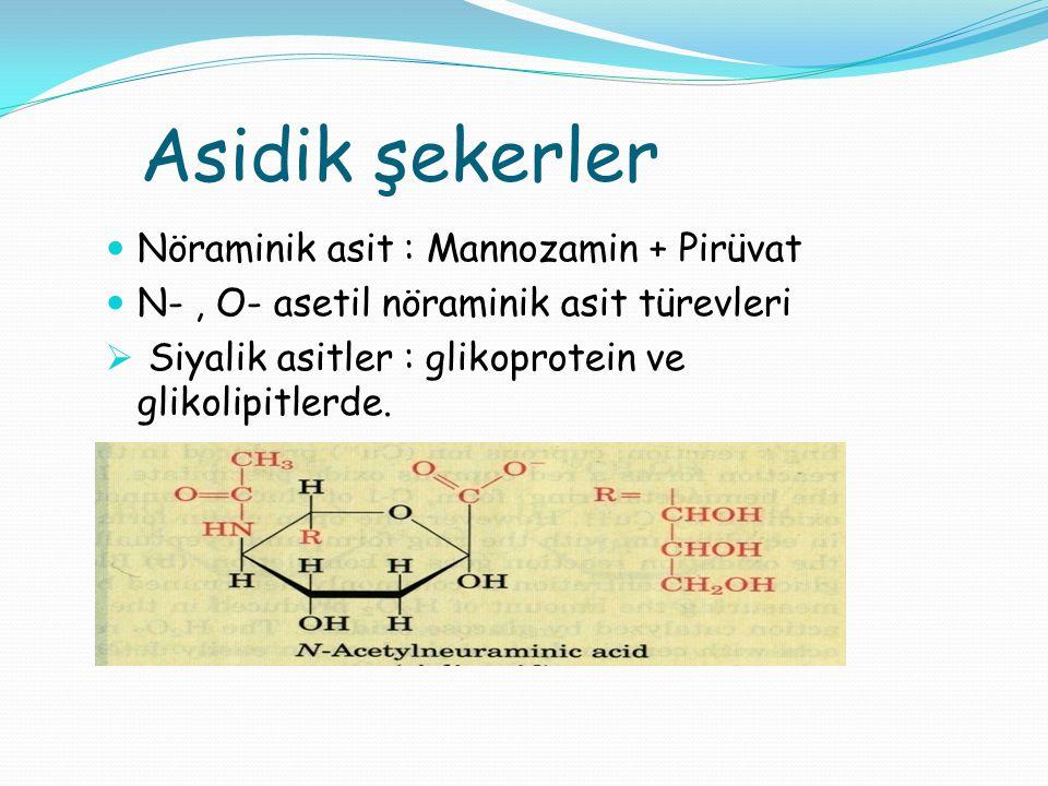 Asidik şekerler Nöraminik asit : Mannozamin + Pirüvat