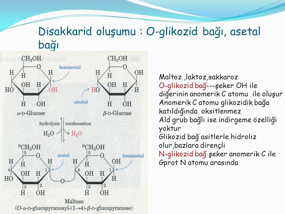 Disakkarid oluşumu : O-glikozid bağı, asetal bağı
