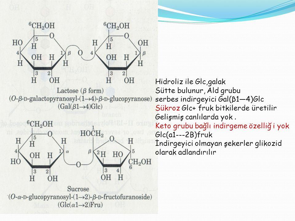 Hidroliz ile Glc,galak Sütte bulunur, Ald grubu. serbes indirgeyici Gal(β1—4)Glc. Sükroz Glc+ fruk bitkilerde üretilir.