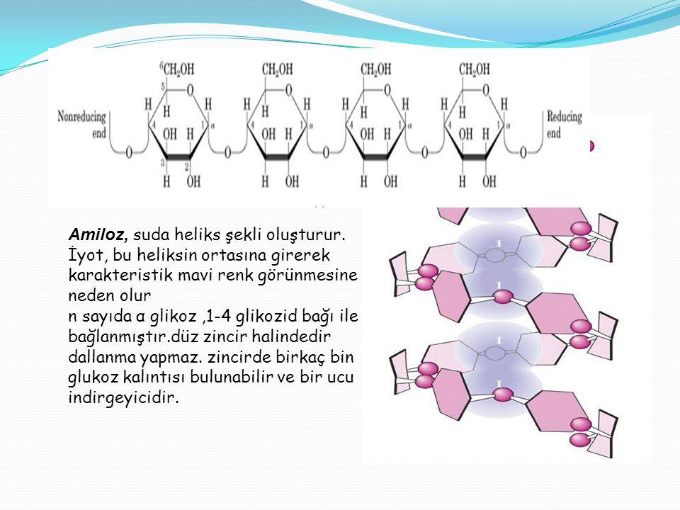 Amiloz, suda heliks şekli oluşturur
