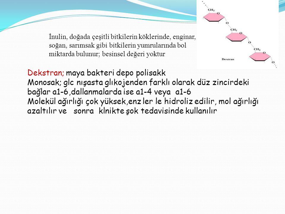 Dekstran; maya bakteri depo polisakk