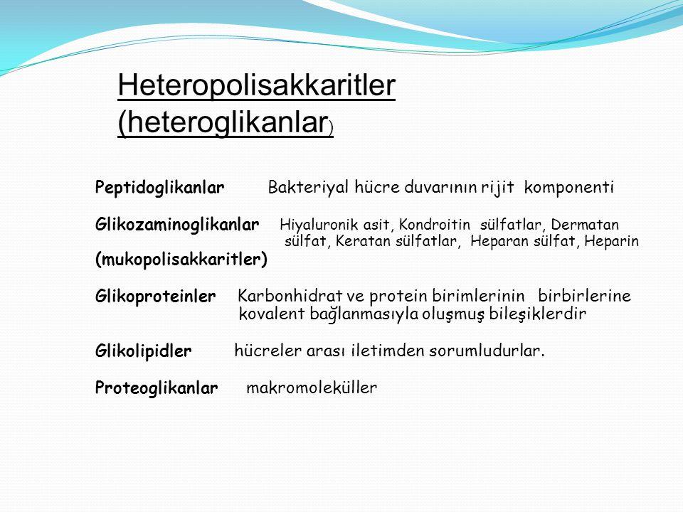 Heteropolisakkaritler (heteroglikanlar)