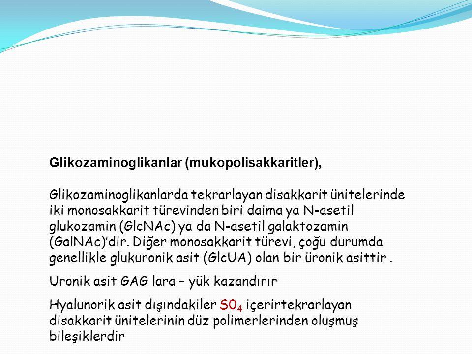 Glikozaminoglikanlar (mukopolisakkaritler),