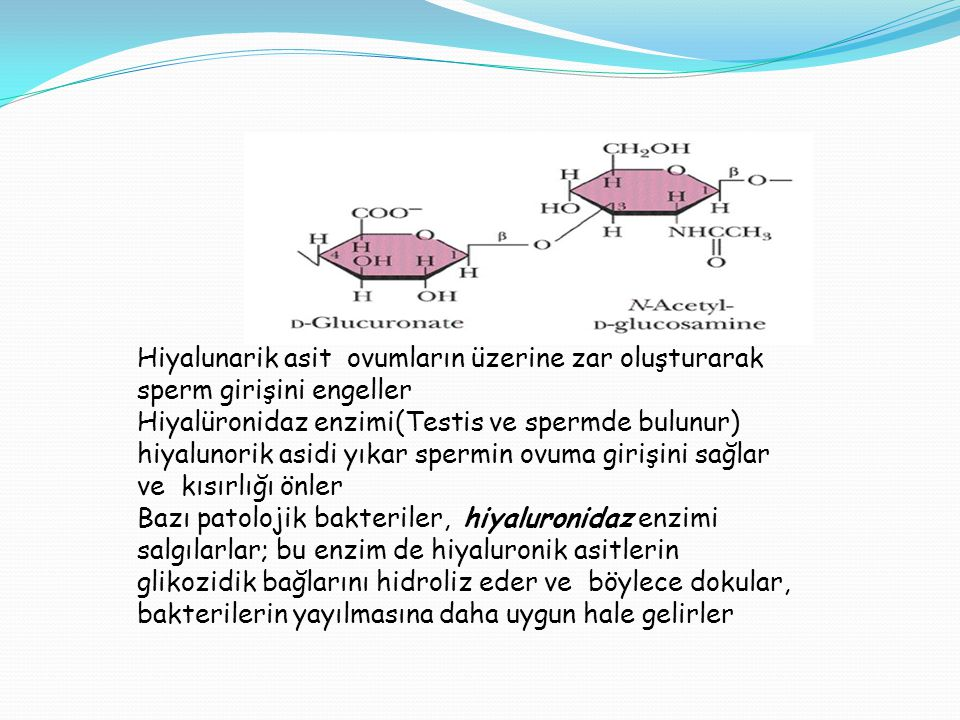 Hiyalunarik asit ovumların üzerine zar oluşturarak sperm girişini engeller