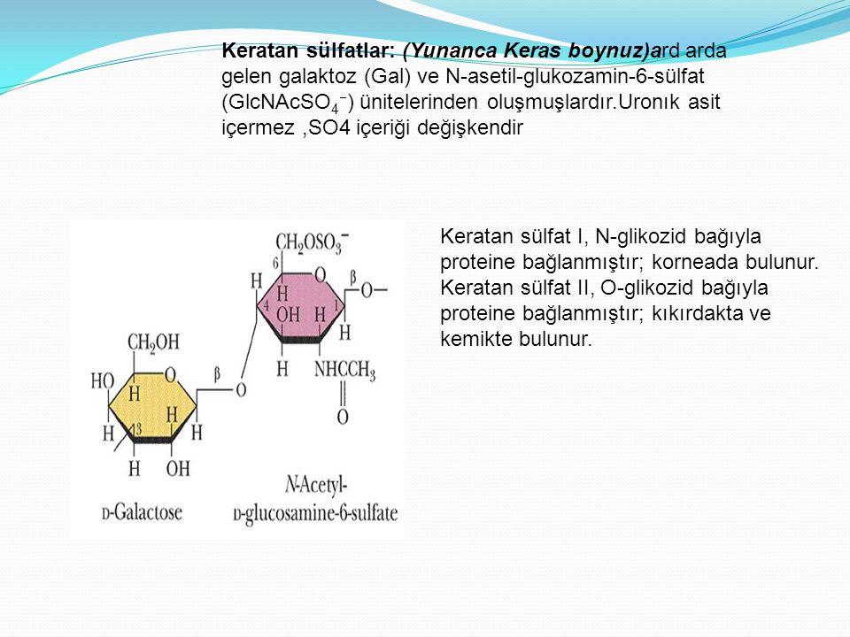 Keratan sülfatlar: (Yunanca Keras boynuz)ard arda gelen galaktoz (Gal) ve N-asetil-glukozamin-6-sülfat (GlcNAcSO4) ünitelerinden oluşmuşlardır.Uronık asit içermez ,SO4 içeriği değişkendir