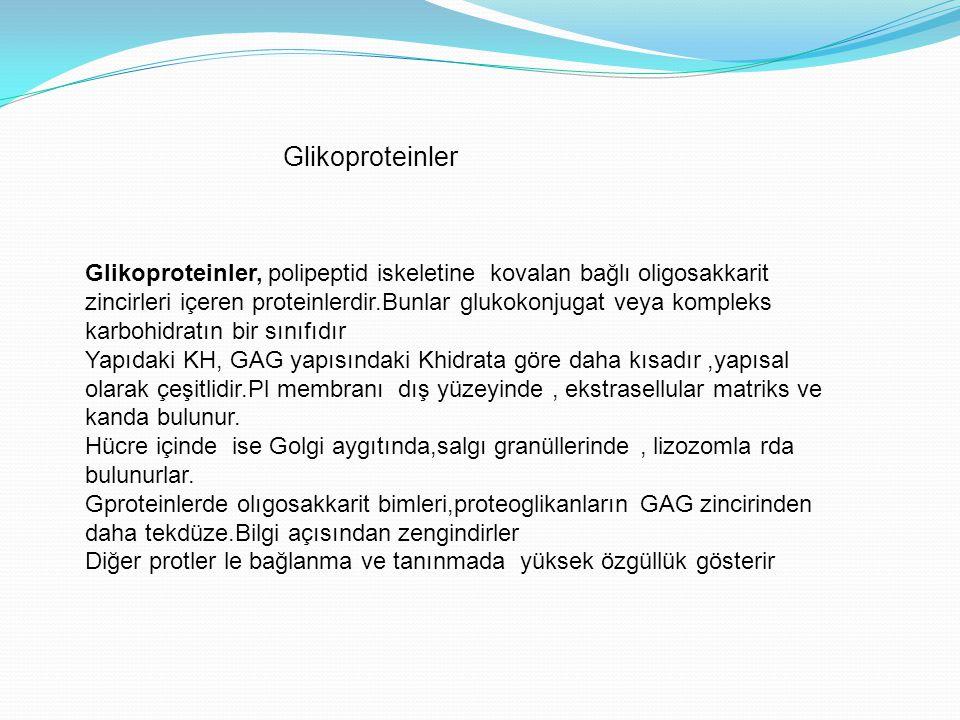 Glikoproteinler Glikoproteinler, polipeptid iskeletine kovalan bağlı oligosakkarit.