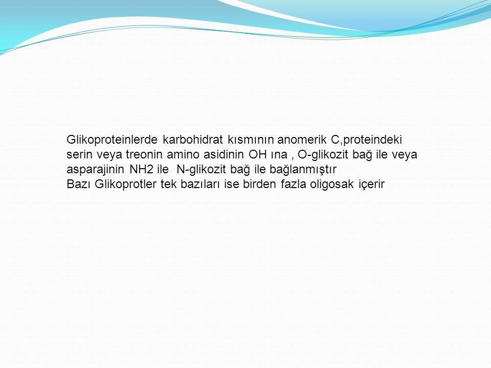 Glikoproteinlerde karbohidrat kısmının anomerik C,proteindeki serin veya treonin amino asidinin OH ına , O-glikozit bağ ile veya asparajinin NH2 ile N-glikozit bağ ile bağlanmıştır