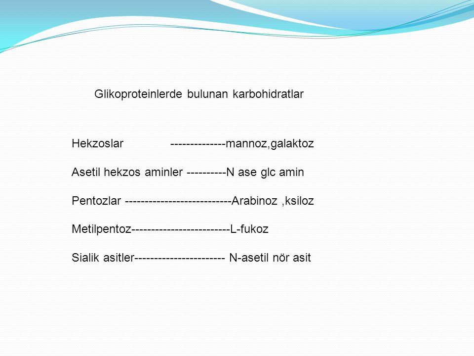 Glikoproteinlerde bulunan karbohidratlar