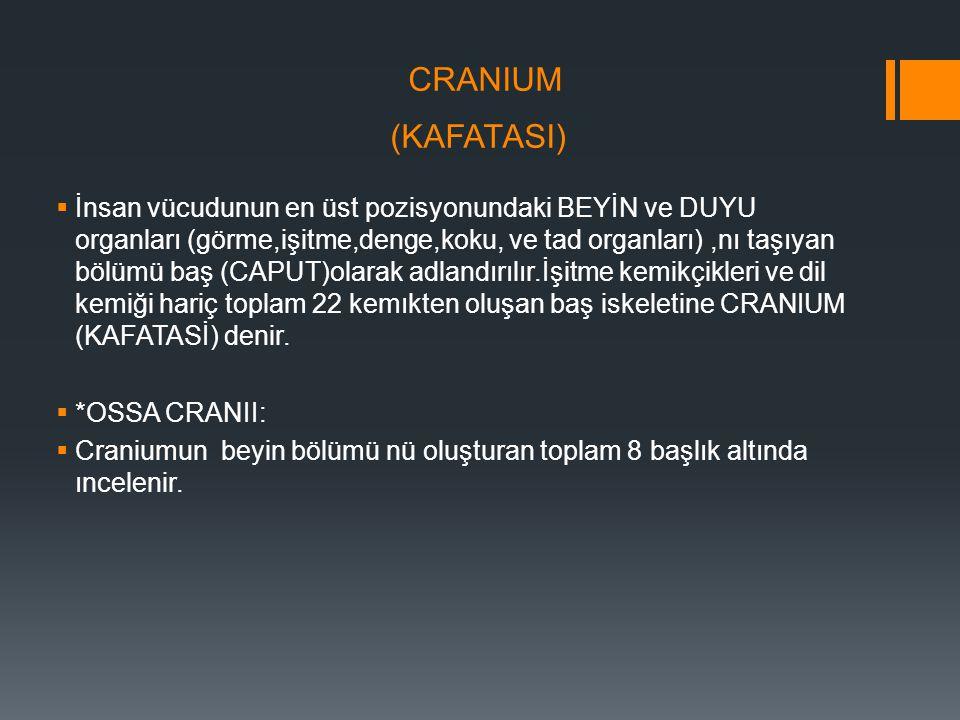 CRANIUM (KAFATASI)