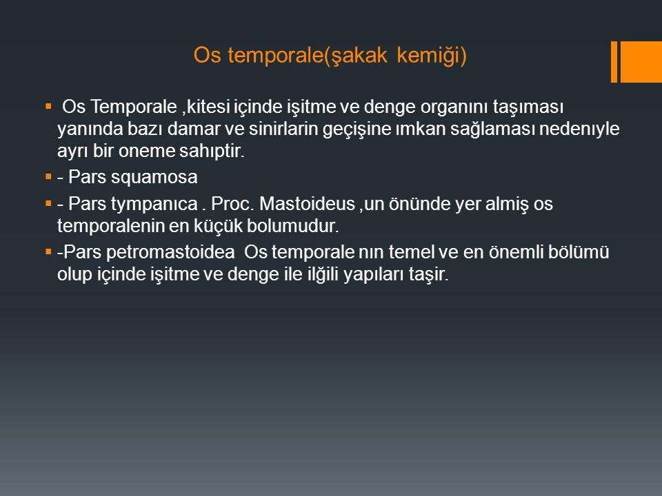 Os temporale(şakak kemiği)