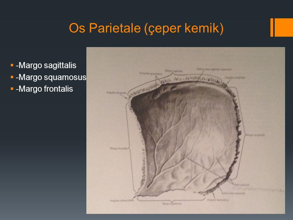 Os Parietale (çeper kemik)