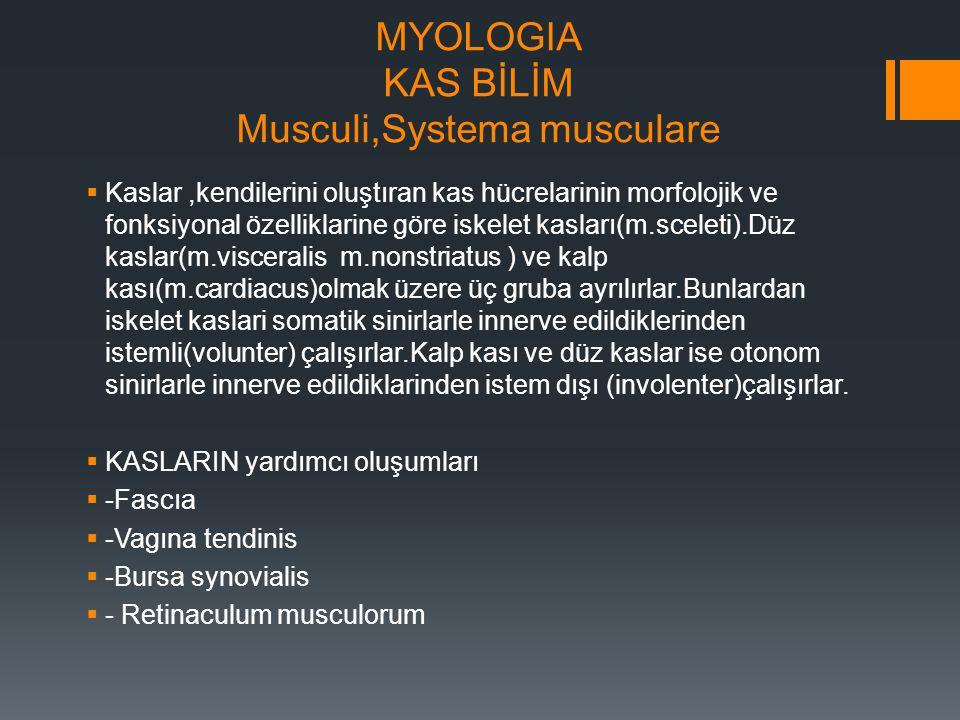 MYOLOGIA KAS BİLİM Musculi,Systema musculare