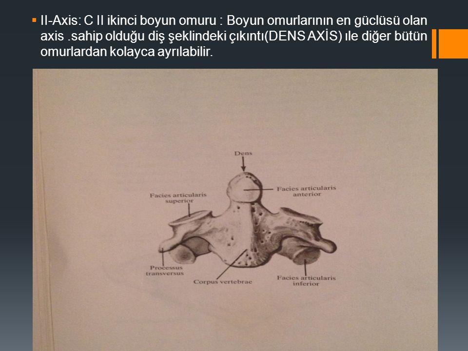 II-Axis: C II ikinci boyun omuru : Boyun omurlarının en güclüsü olan axis .sahip olduğu diş şeklindeki çıkıntı(DENS AXİS) ıle diğer bütün omurlardan kolayca ayrılabilir.