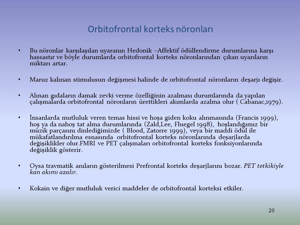 Orbitofrontal korteks nöronları