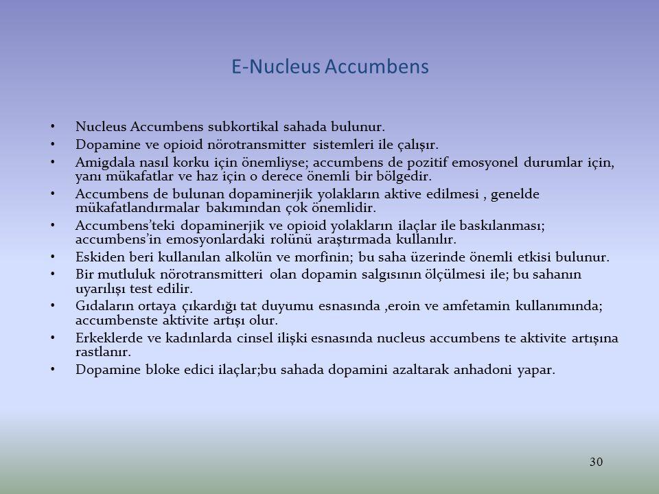 E-Nucleus Accumbens Nucleus Accumbens subkortikal sahada bulunur.
