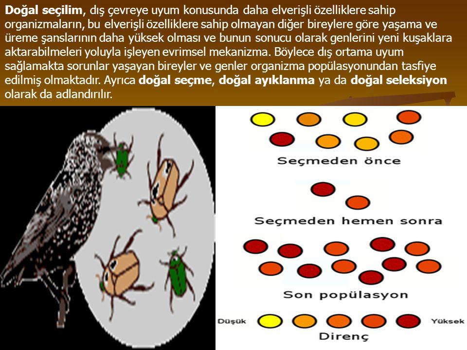 Doğal seçilim, dış çevreye uyum konusunda daha elverişli özelliklere sahip organizmaların, bu elverişli özelliklere sahip olmayan diğer bireylere göre yaşama ve üreme şanslarının daha yüksek olması ve bunun sonucu olarak genlerini yeni kuşaklara aktarabilmeleri yoluyla işleyen evrimsel mekanizma.