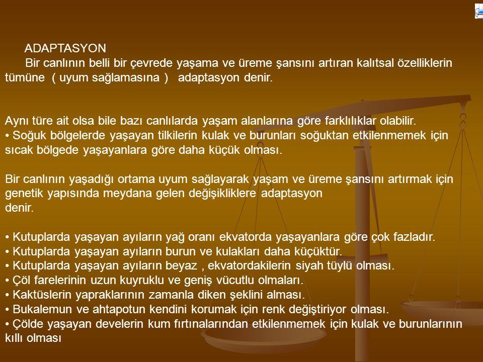 ADAPTASYON
