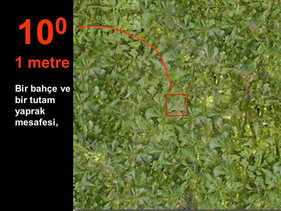 100 1 metre Bir bahçe ve bir tutam yaprak mesafesi,