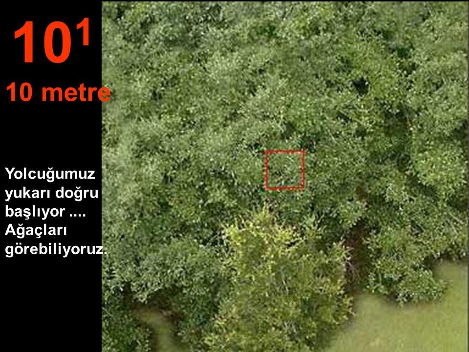 101 10 metre Yolcuğumuz yukarı doğru başlıyor .... Ağaçları görebiliyoruz.