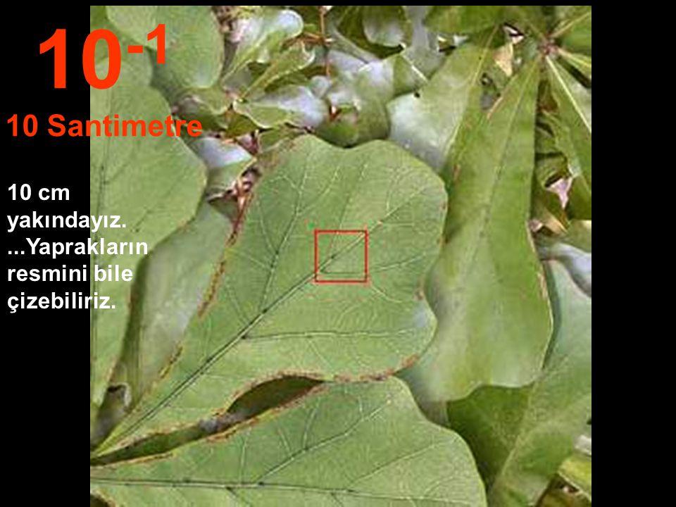 10-1 10 Santimetre 10 cm yakındayız. ...Yaprakların resmini bile çizebiliriz.