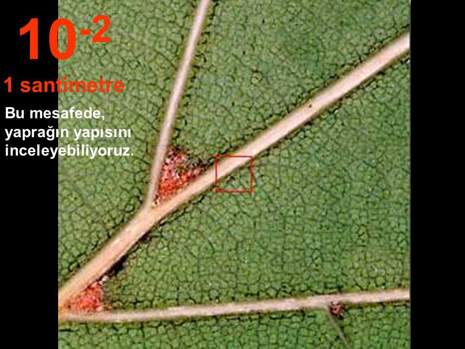 10-2 1 santimetre Bu mesafede, yaprağın yapısını inceleyebiliyoruz.