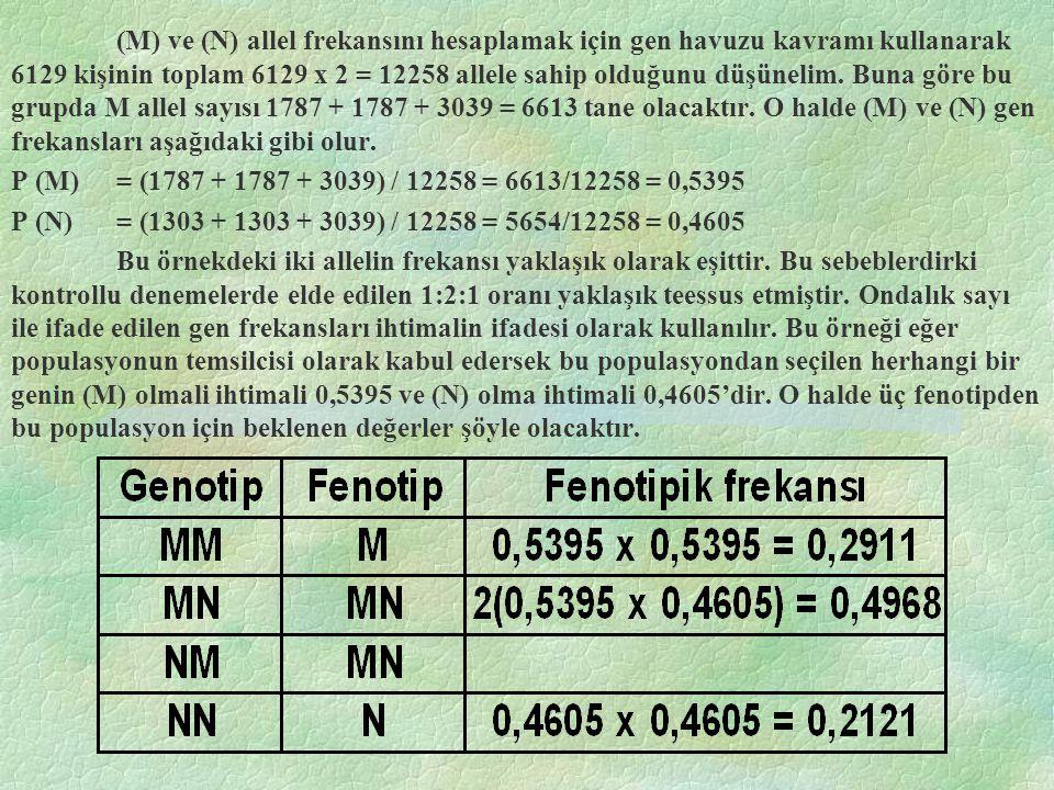 (M) ve (N) allel frekansını hesaplamak için gen havuzu kavramı kullanarak 6129 kişinin toplam 6129 x 2 = 12258 allele sahip olduğunu düşünelim. Buna göre bu grupda M allel sayısı 1787 + 1787 + 3039 = 6613 tane olacaktır. O halde (M) ve (N) gen frekansları aşağıdaki gibi olur.