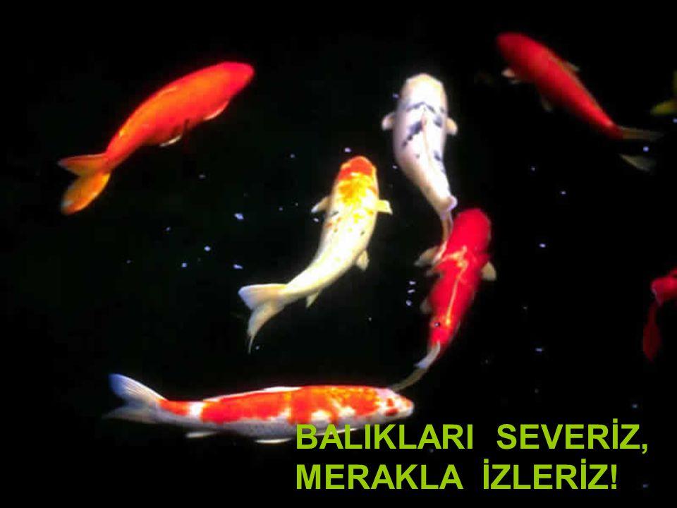 BALIKLARI SEVERİZ, MERAKLA İZLERİZ! ,