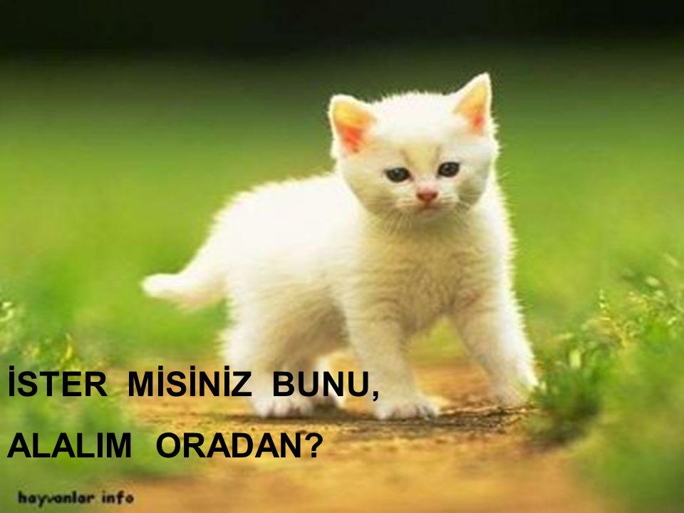 İSTER MİSİNİZ BUNU, ALALIM ORADAN Kadiriye Özer