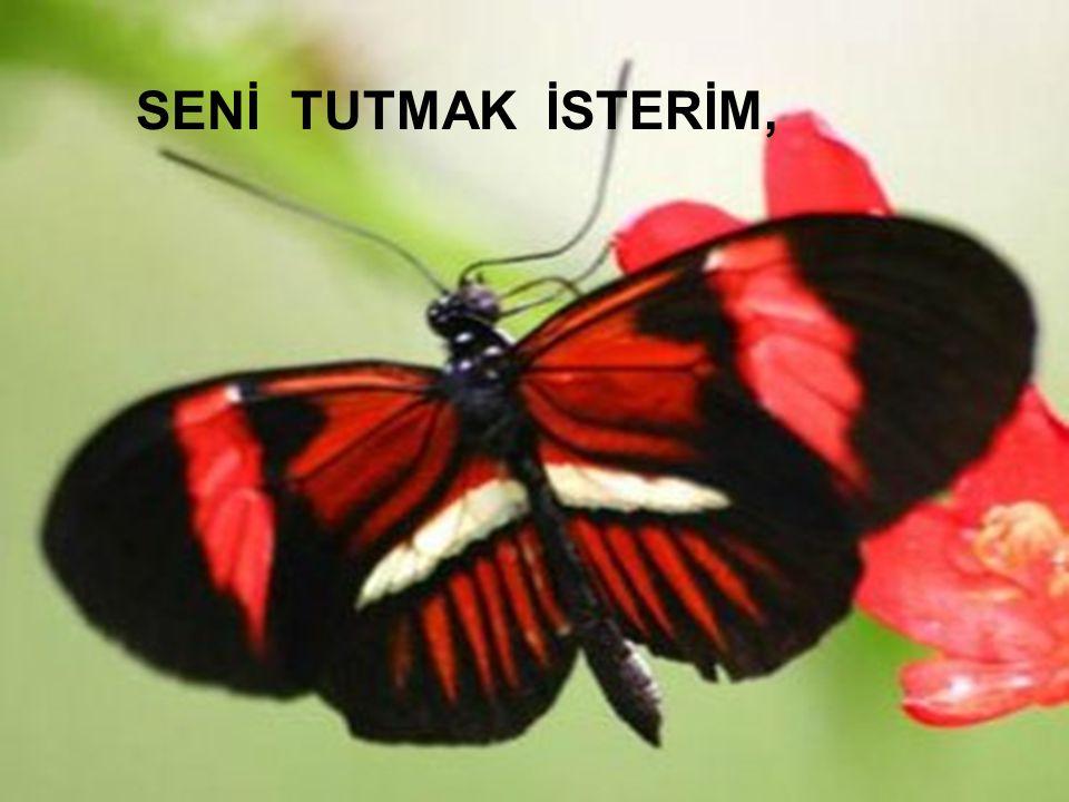 SENİ TUTMAK İSTERİM, Kadiriye Özer
