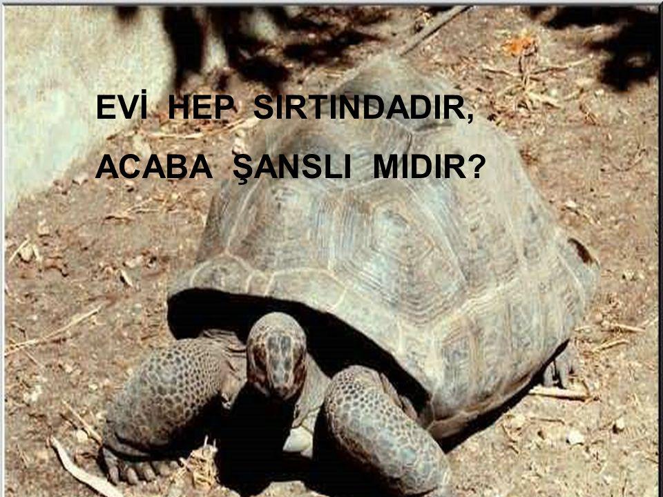 EVİ HEP SIRTINDADIR, ACABA ŞANSLI MIDIR Kadiriye Özer