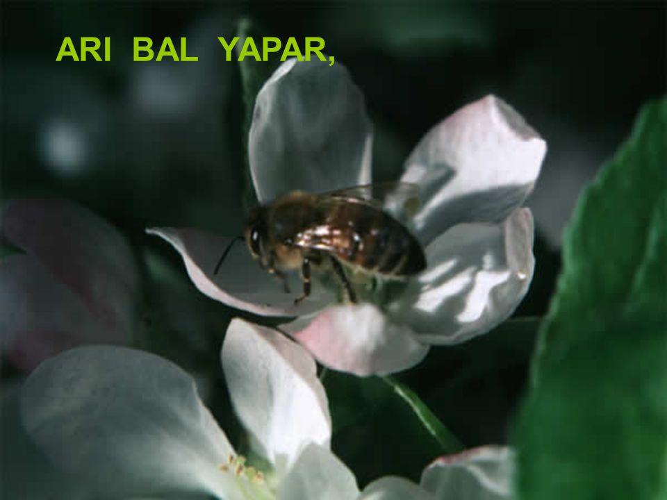 ARI BAL YAPAR, Kadiriye Özer