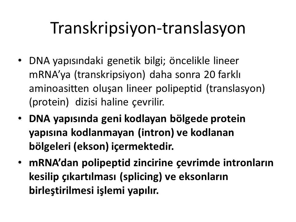 Transkripsiyon-translasyon