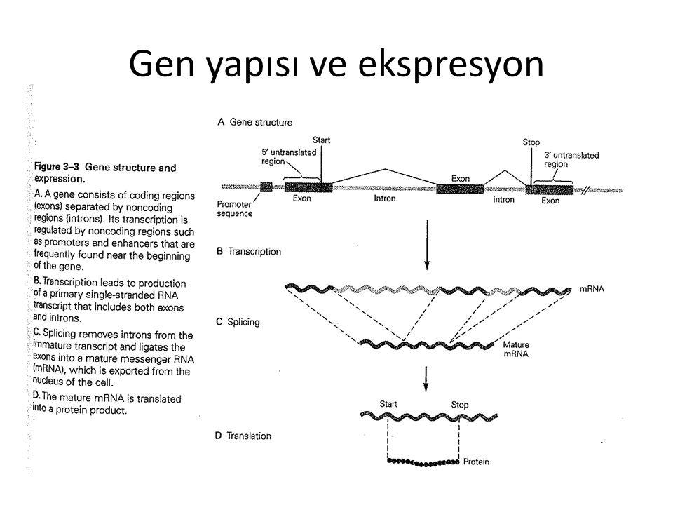 Gen yapısı ve ekspresyon