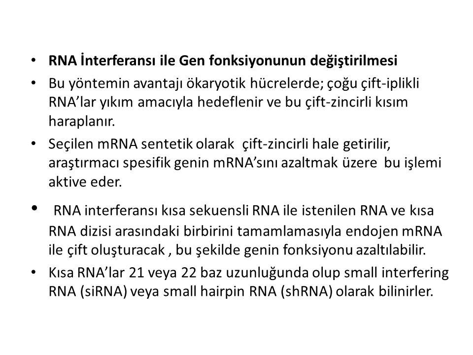 RNA İnterferansı ile Gen fonksiyonunun değiştirilmesi