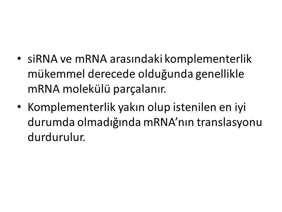 siRNA ve mRNA arasındaki komplementerlik mükemmel derecede olduğunda genellikle mRNA molekülü parçalanır.