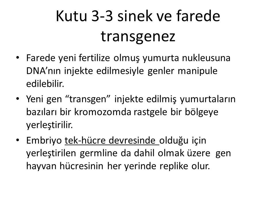 Kutu 3-3 sinek ve farede transgenez