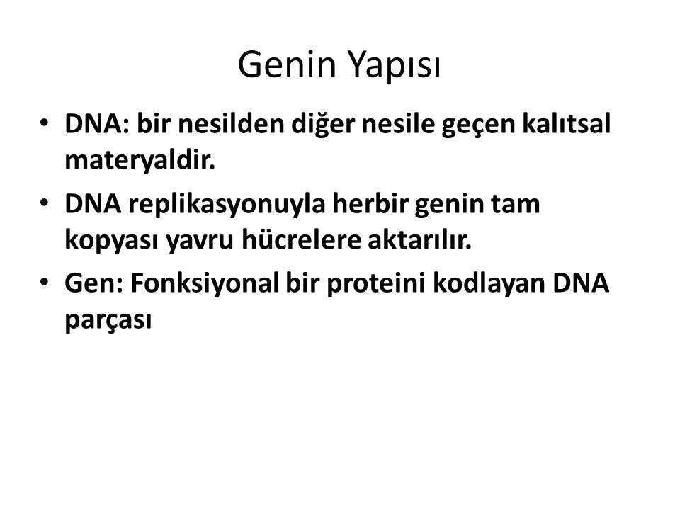 Genin Yapısı DNA: bir nesilden diğer nesile geçen kalıtsal materyaldir. DNA replikasyonuyla herbir genin tam kopyası yavru hücrelere aktarılır.