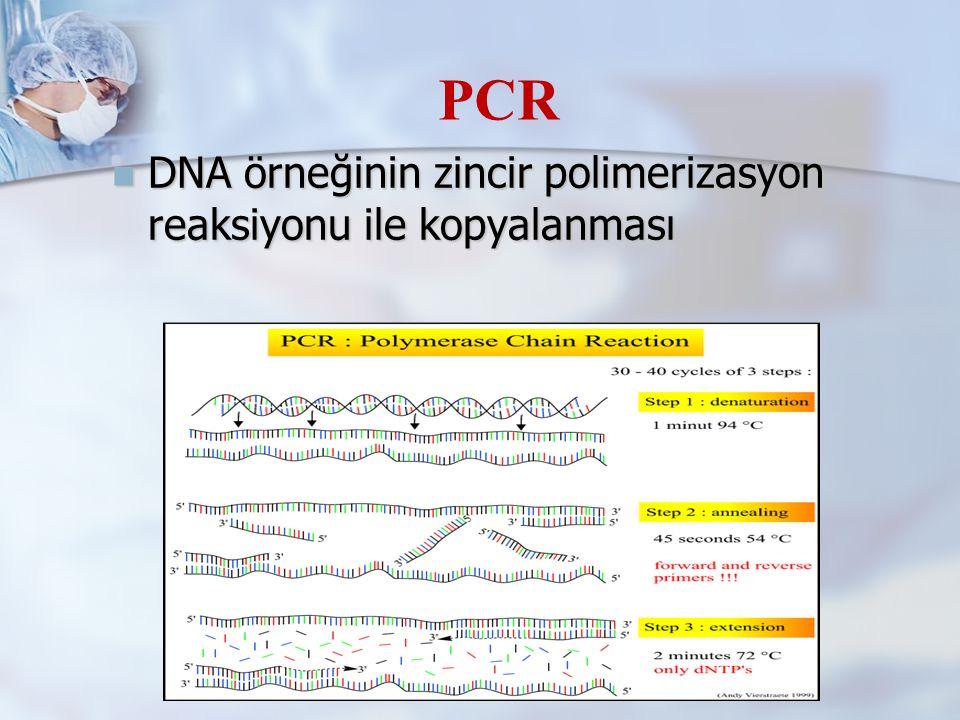 PCR DNA örneğinin zincir polimerizasyon reaksiyonu ile kopyalanması