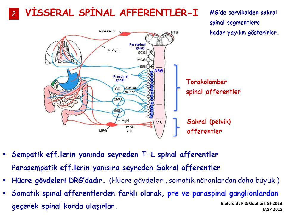 VİSSERAL SPİNAL AFFERENTLER-I